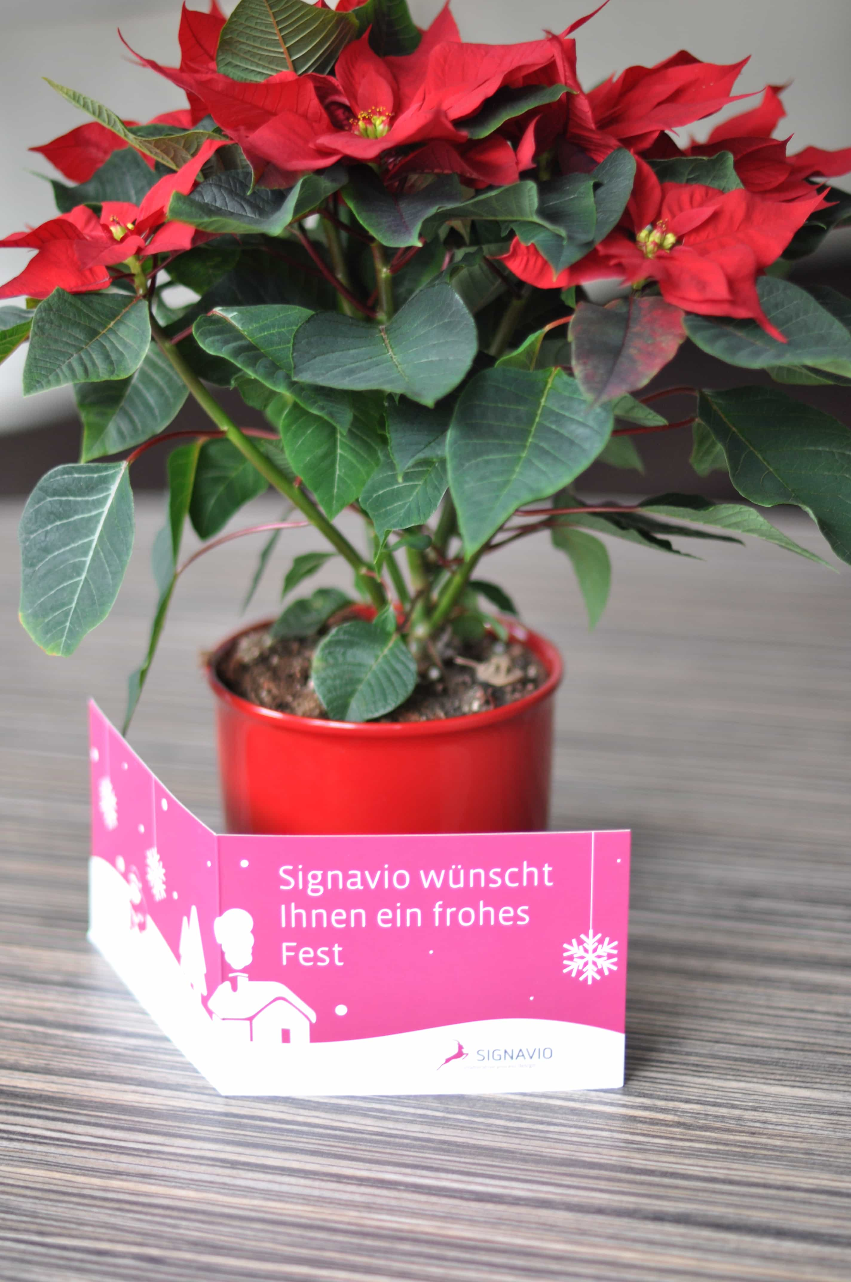 Signavio wünscht Frohe Weihnachten