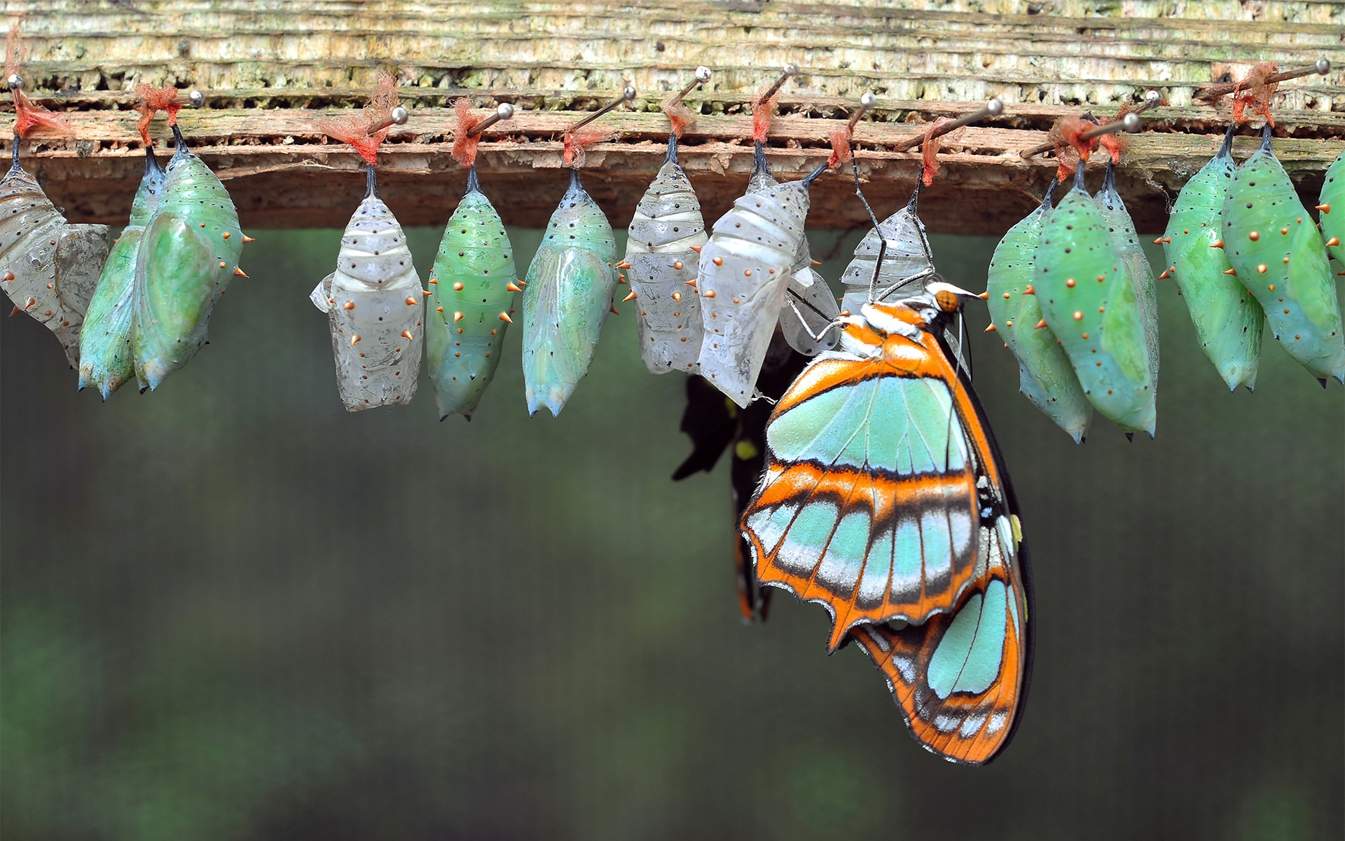 Business transformation blog post image - butterfly emerging from chrysalis