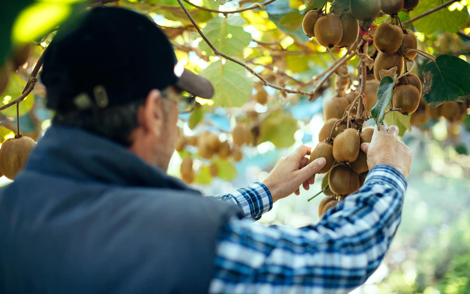 Simplifying Global Supply Chains with BPM - Zespri's Story
