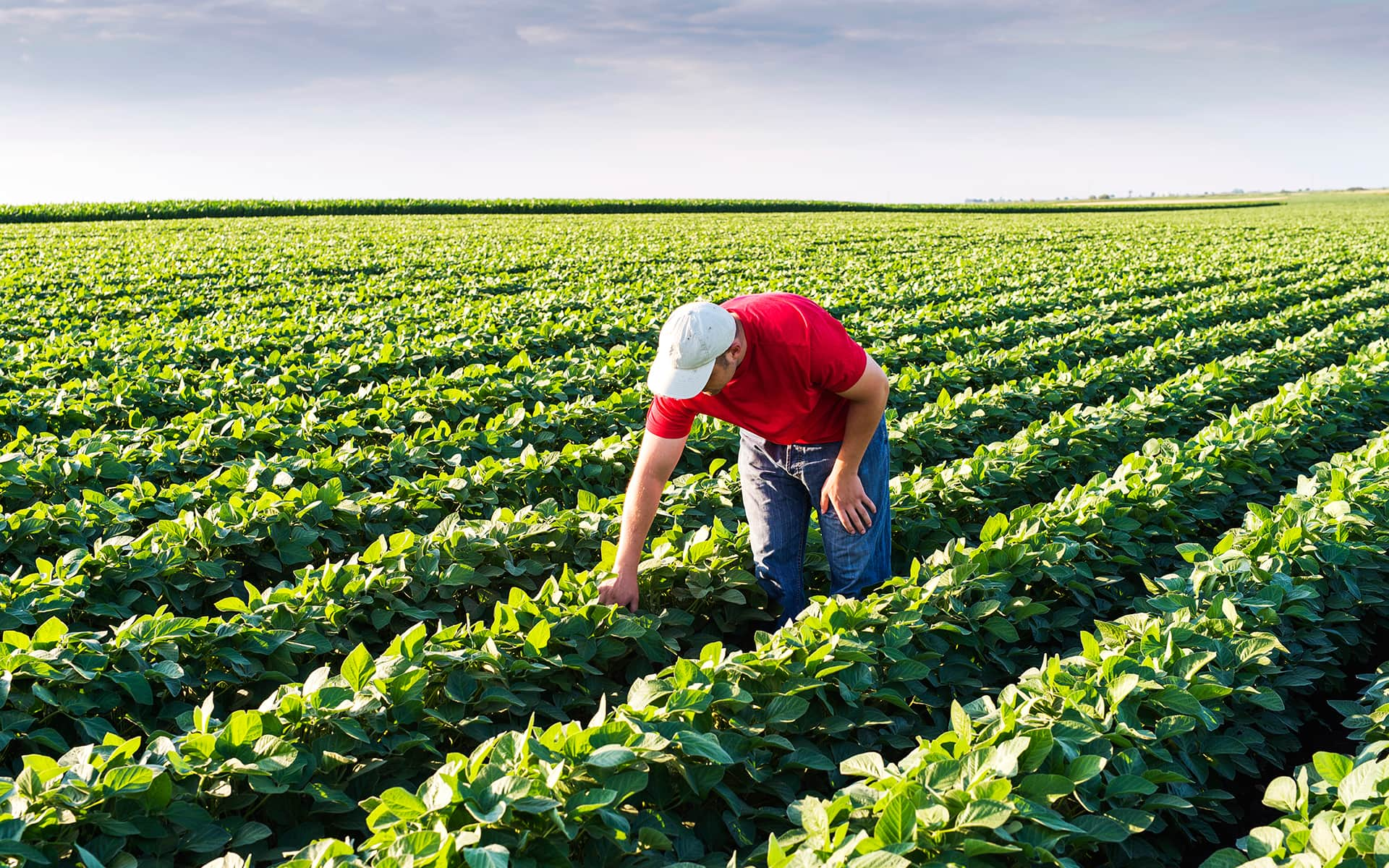 Farmer gathering on his field: Gathering your own crop in modern times can mean, dogfooding a publishing workflow