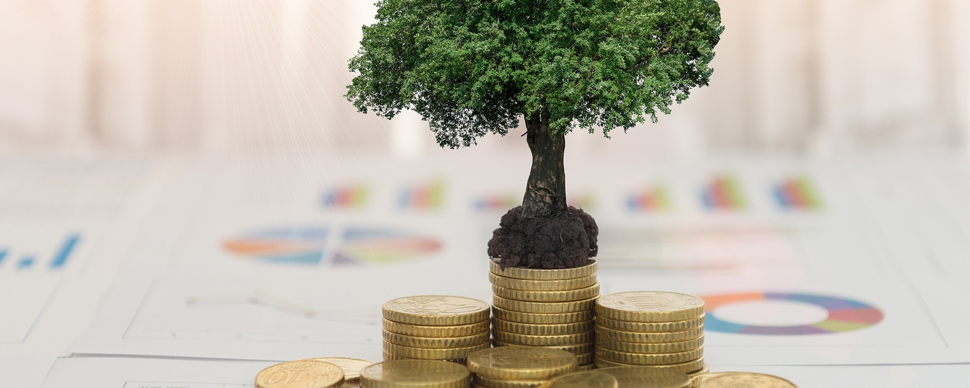 123% ROI with process management - money tree image