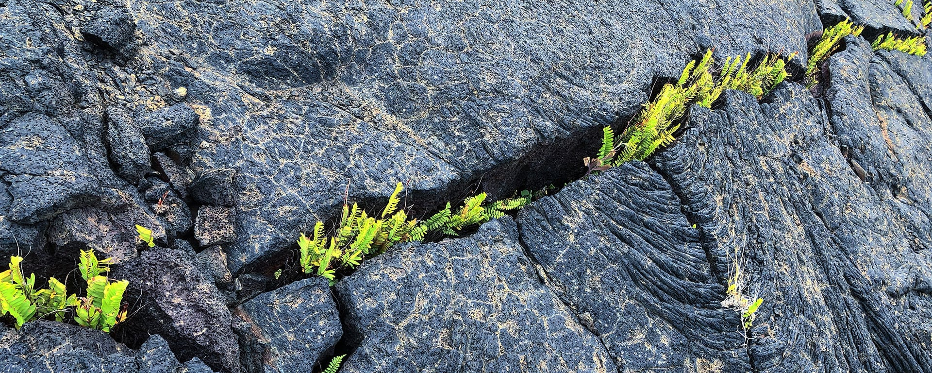how process mining supports operational resilience - plants in lava
