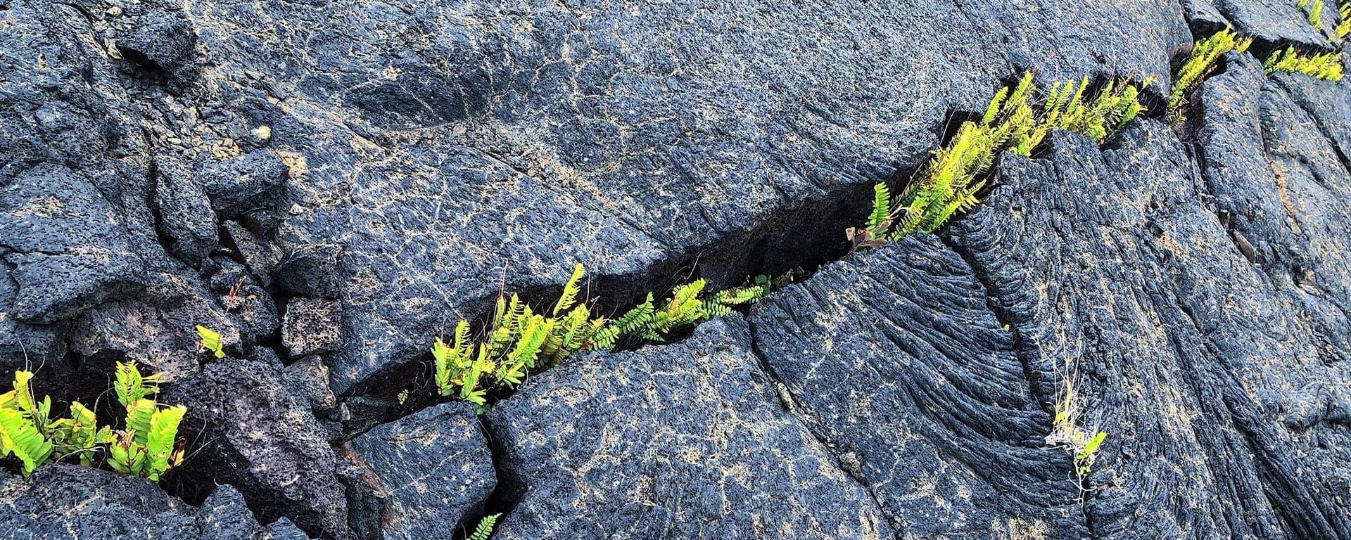 Comment le process mining soutient la résilience opérationnelle - plantes lave